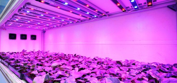 چراغ LED ال ای دی رشد گیاه